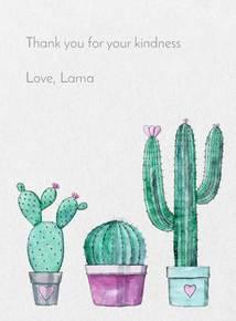 Thumb cactus eng